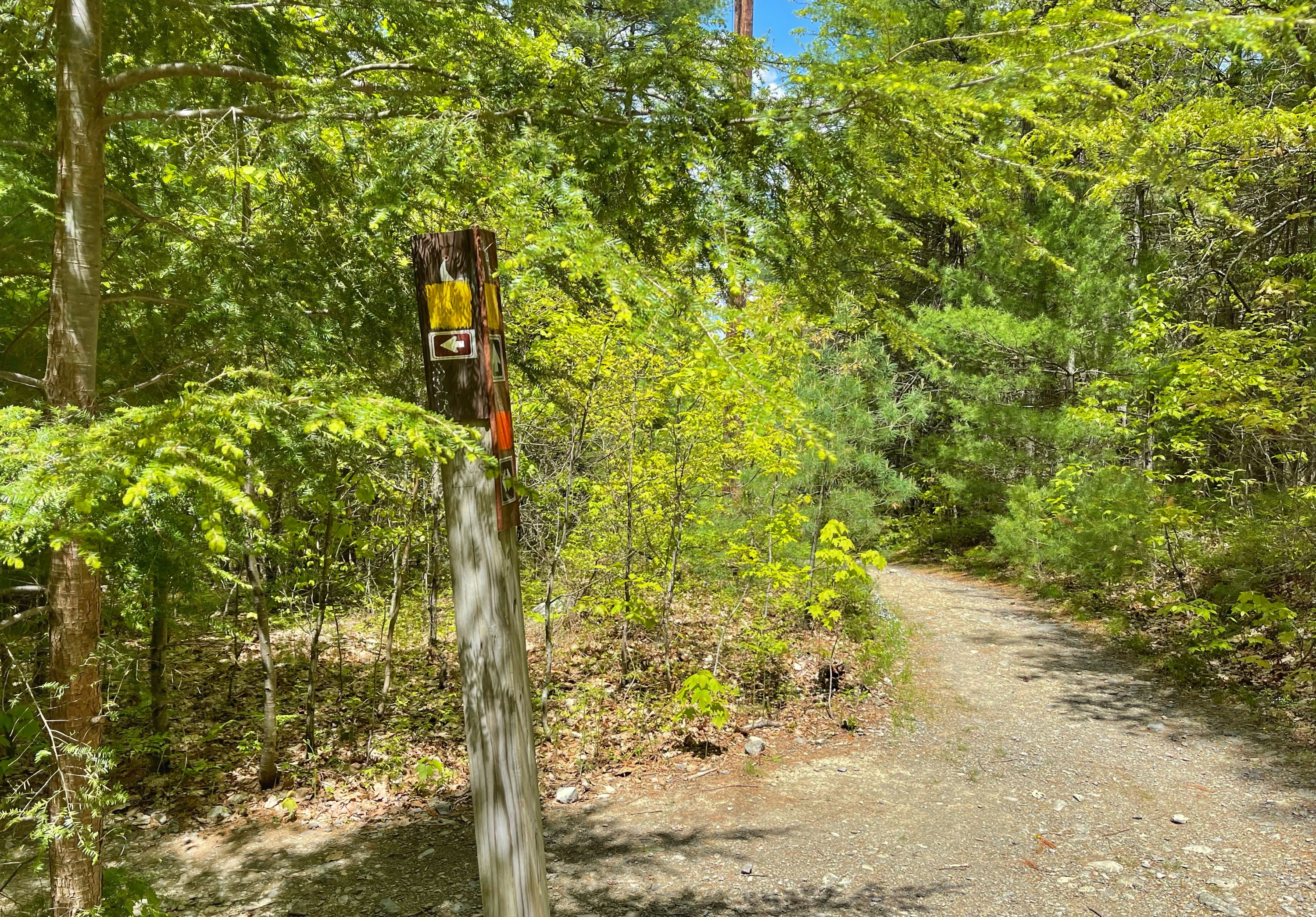 Junction of Buchanan Trail and Hackers Trail