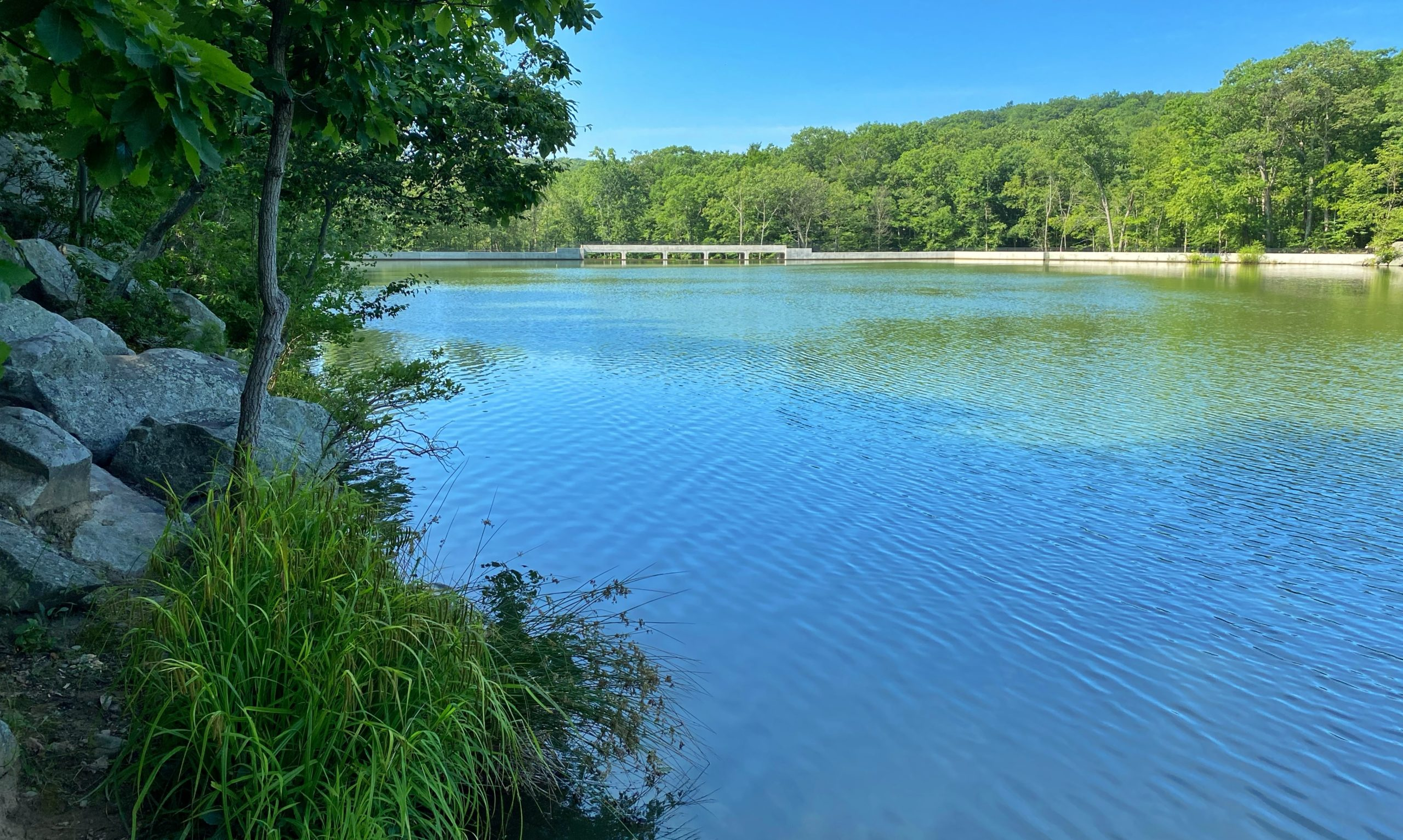 View of Canty's Lake in Silas Condict County Park